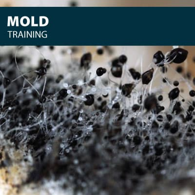 mold safety training certification